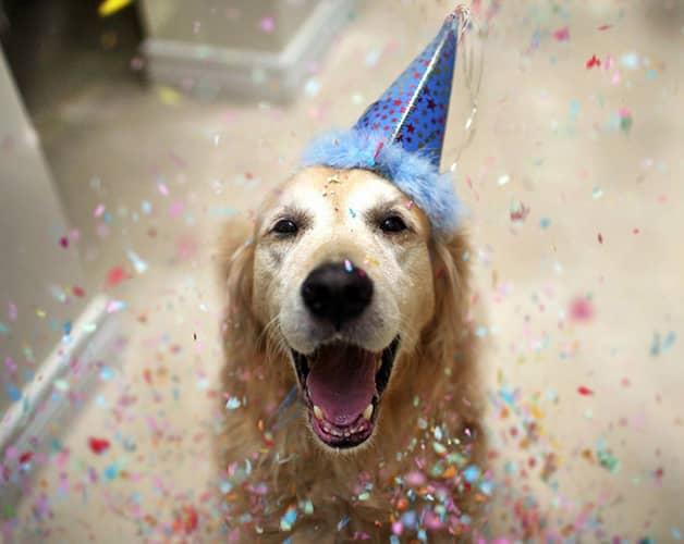Com vocês, Champ, um cãozinho que tem uma vida pra lá de divertida! 14