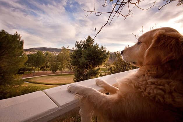 Com vocês, Champ, um cãozinho que tem uma vida pra lá de divertida! 1