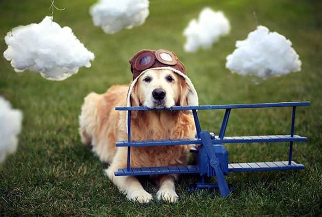 Com vocês, Champ, um cãozinho que tem uma vida pra lá de divertida! 12