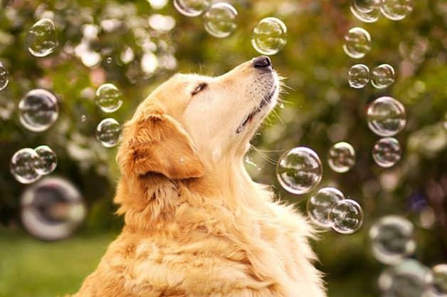 Com vocês, Champ, um cãozinho que tem uma vida pra lá de divertida! 11