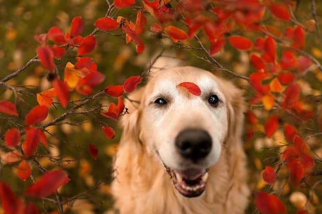 Com vocês, Champ, um cãozinho que tem uma vida pra lá de divertida! 10