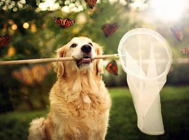 Com vocês, Champ, um cãozinho que tem uma vida pra lá de divertida! 9