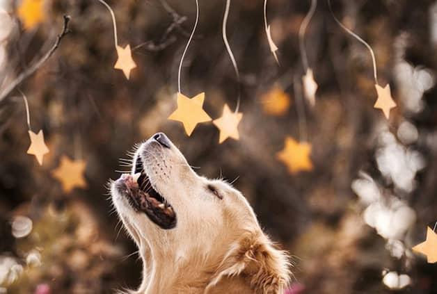 Com vocês, Champ, um cãozinho que tem uma vida pra lá de divertida! 6