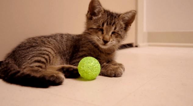 Gatinho cego descobrindo seu primeiro brinquedo 4