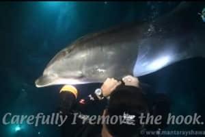 Golfinho pede ajuda a mergulhador para tirar o anzol da sua nadadeira 1