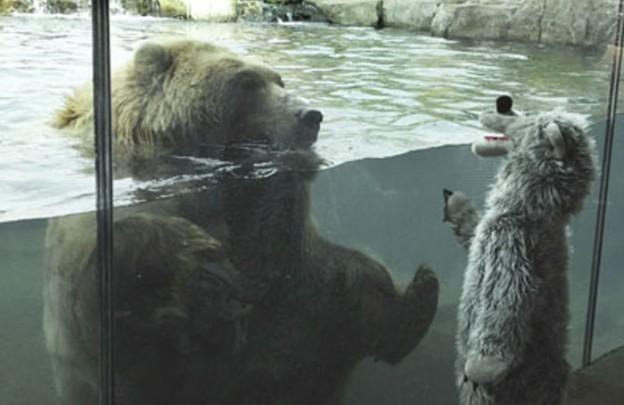 Urso polar se encanta com criança fantasiada de urso 1