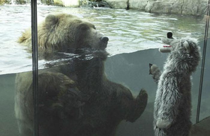 Urso polar se encanta com criança fantasiada de urso 2