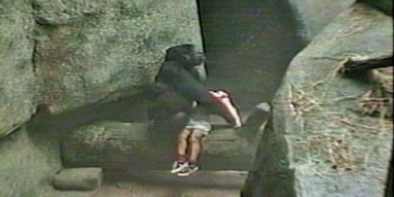 Binti Jua, a gorila que salvou um menino de 3 anos 1