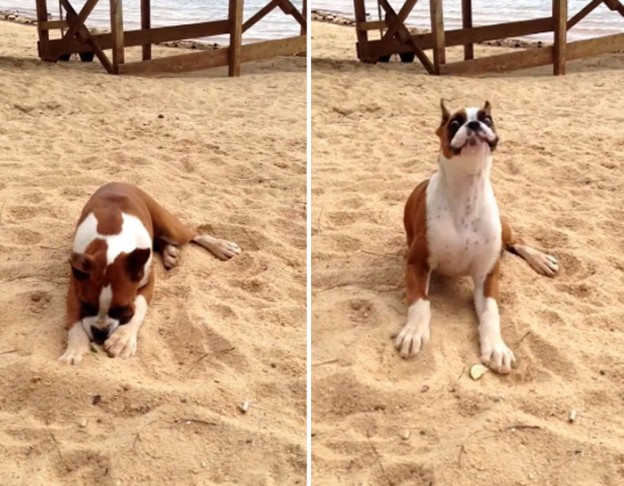 A reação de um cachorrinho ao chupar limão 4