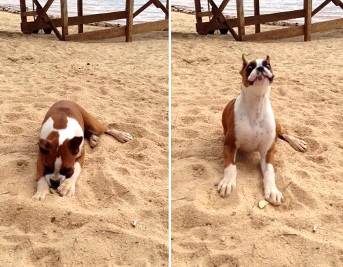 A reação de um cachorrinho ao chupar limão 1
