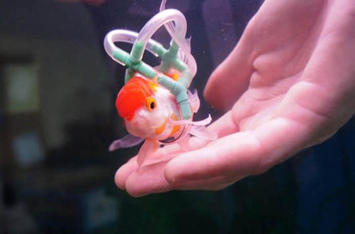 O homem que fez um colete para salvar a vida de seu peixe 1