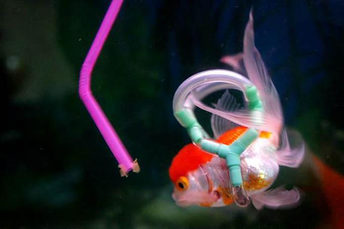 fish-lifejacket-4