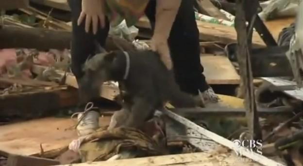 Após tornado, senhora reencontra seu cachorro no meio da entrevista 1