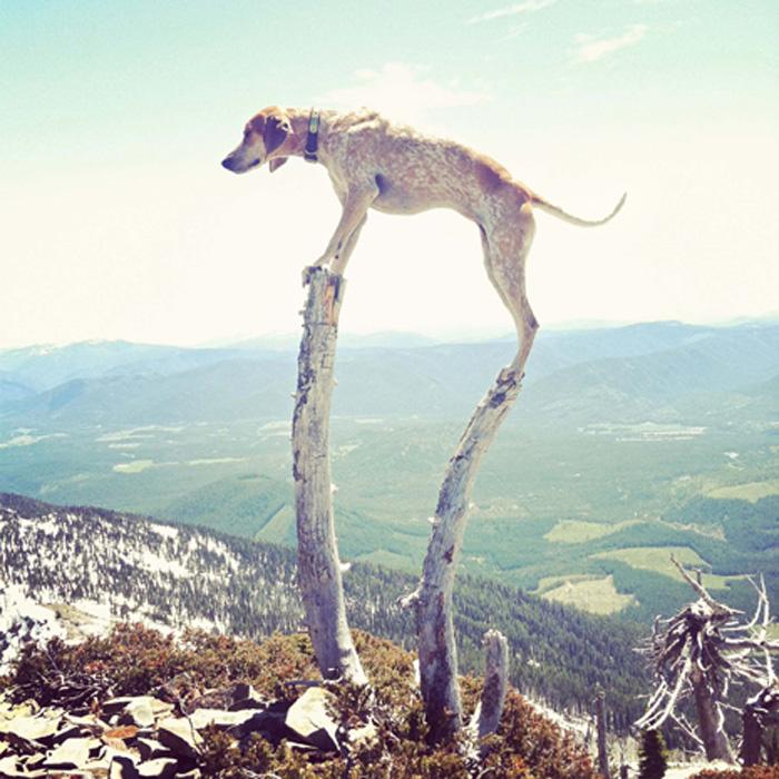 Cachorro equilibrista em ensaio fotográfico interessante e divertido 2