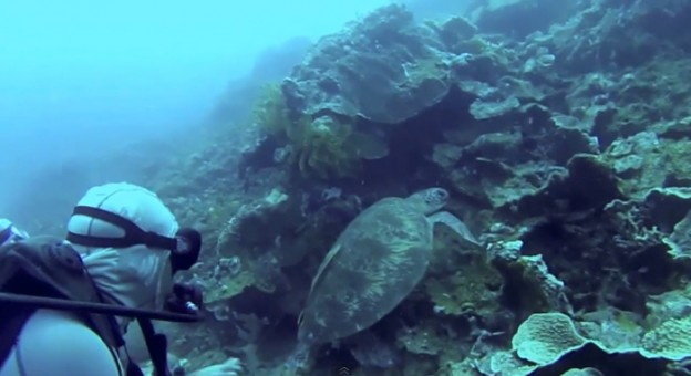 Mergulhadores salvam tartaruga de um anzol que a prendia 1