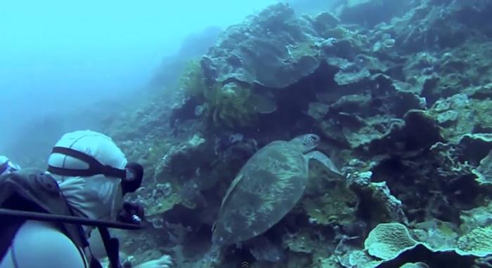 Mergulhadores salvam tartaruga de um anzol que a prendia 4
