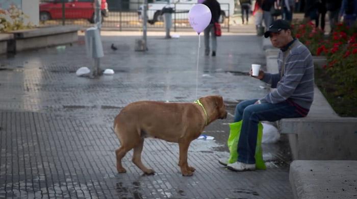 Ação faz com que cachorros de rua deixem de ser invisíveis 2