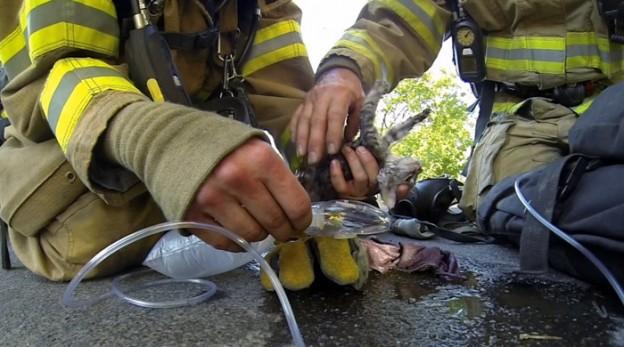 Câmera registra o resgate de um gatinho inconsciente em um incêndio doméstico 1