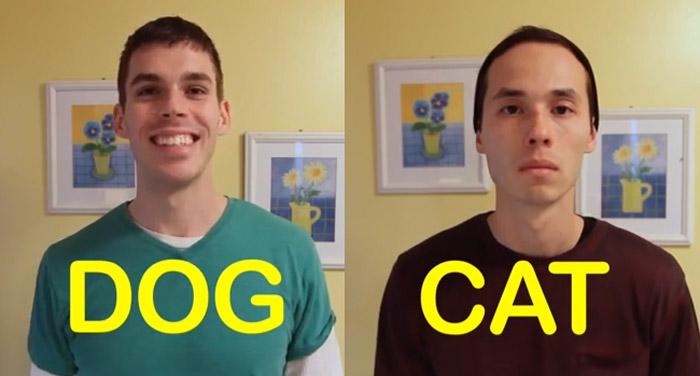 Vídeo divertido mostra as diferenças entre cães e gatos 2
