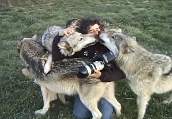 Conheça o fotógrafo que é melhor amigos dos lobos 2