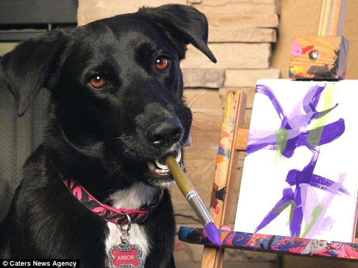 Cadela pinta quadros e verba arrecadada ajuda outros animais 2