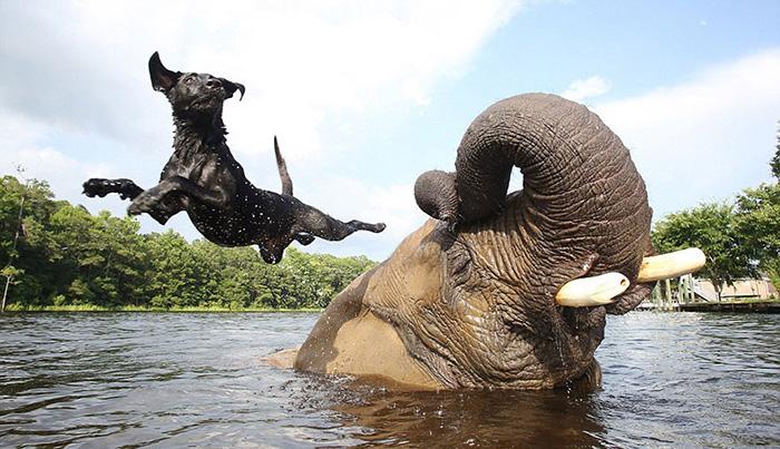 Série retrata a amizade de uma cadela e uma elefanta 2