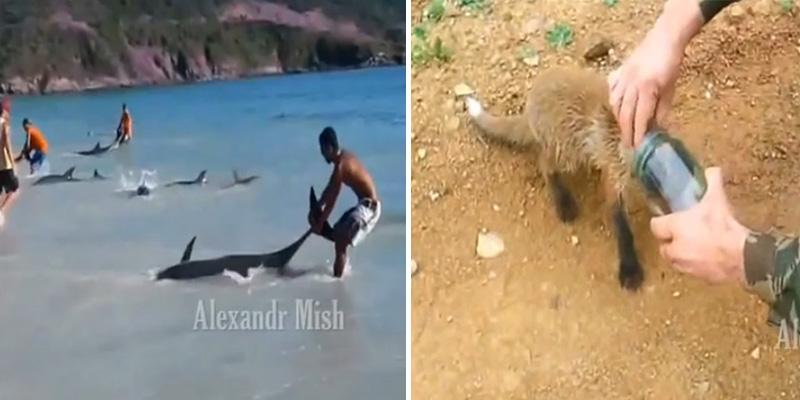Vídeo com compilação de pessoas resgatando animais em apuros é puro amor 1