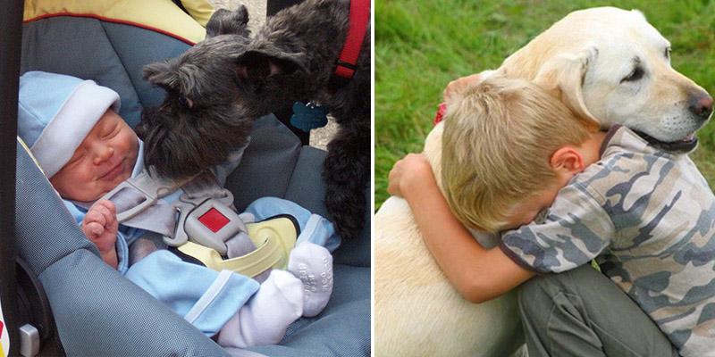 24 cães e seus melhores amigos bebês 1