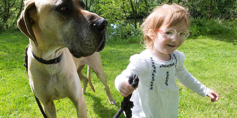 Cão ajuda a prever crises de epilepsia de menina na Irlanda 1