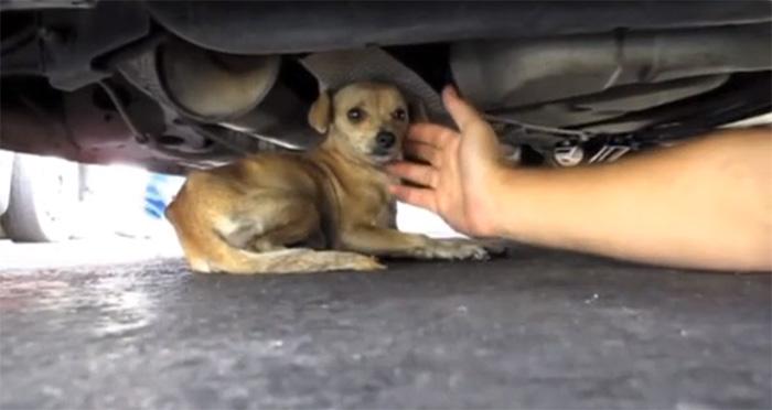 ONG faz vídeo em homenagem às pessoas que ajudam animais abandonados 2