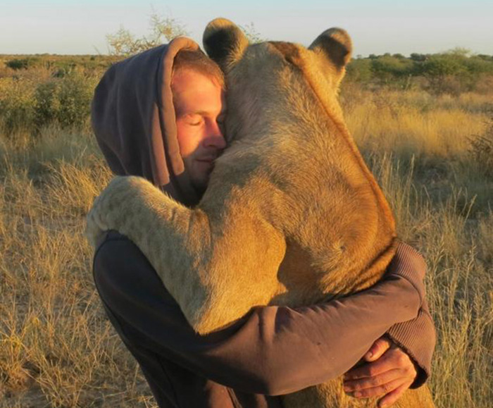 Leoa abandonada abraça homens que a resgataram da morte na África 3