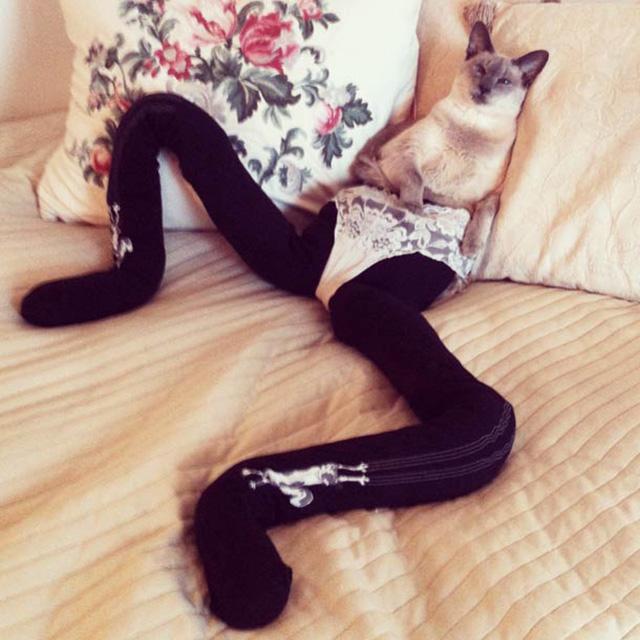 Tumblr que dá 'pernas' a gatos faz sucesso na web 1