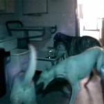 Cão organizava festas noturnas em abrigo inglês 8