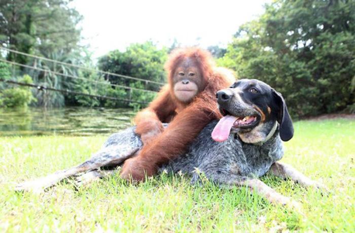 A improvável (e linda) amizade entre um cão e um macaco 1