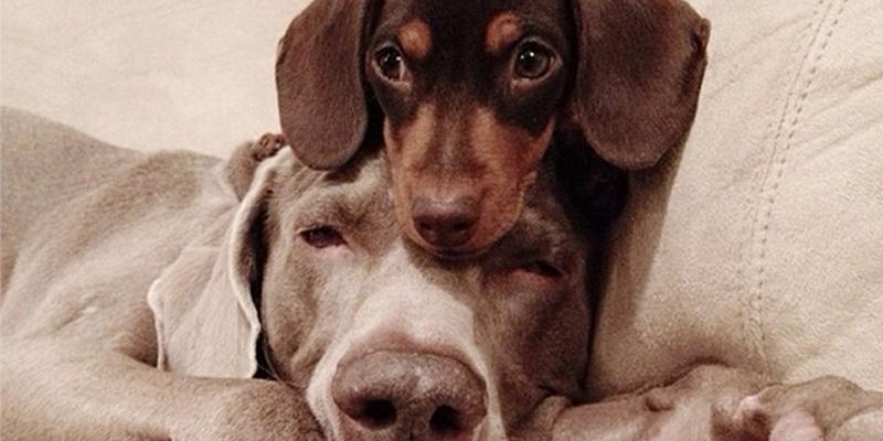 Um enorme cão e um pequeno filhote são inseparáveis melhores amigos 1