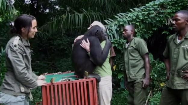 Antes de voltar pra selva, chimpanzé abraça mulher que o cuidou 1