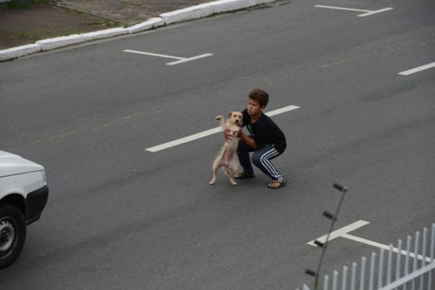 Criança socorre cachorro atropelado no meio da rua 1