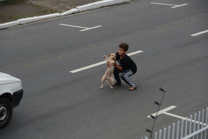 Criança socorre cachorro atropelado no meio da rua 4