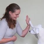 Abandonado por ser surdo, esse cão teve nova chance e aprendeu língua de sinais 3