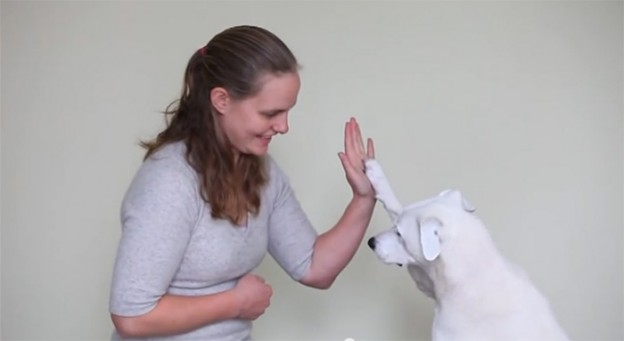Abandonado por ser surdo, esse cão teve nova chance e aprendeu língua de sinais 8
