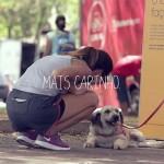 Cadela abandonada passa dia recebendo carinho pra ver o lado bom dos humanos 4