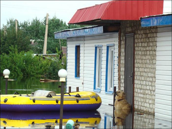 Cão permanece em frente à casa dos donos mesmo depois de enchente 2