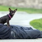 ONG de jovem ator americano já evitou a morte de mais de 20 mil animais de estimação 2