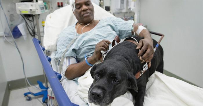 Cão-guia salta em trilhos do metrô de NY para salvar dono após desmaio 3