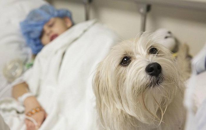 Hospital nos EUA permite presença de cão durante cirurgia de menina de sete anos 2