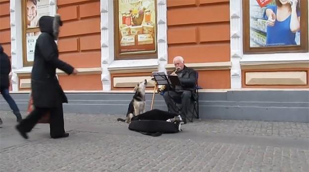 Cão abandonado ajuda clarinetista em música e é adotado na Ucrânia 1