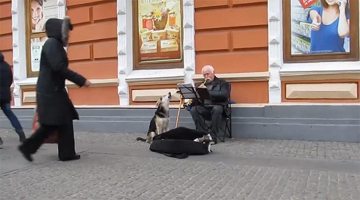 Cão abandonado ajuda clarinetista em música e é adotado na Ucrânia 2