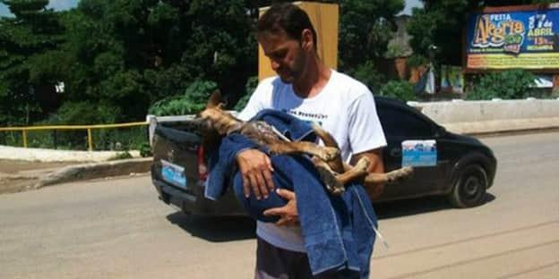 Cães quase sem vida são salvos, tratados e se transformam graças a bondade de um homem 1