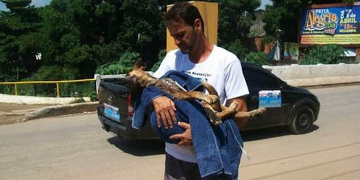 Cães quase sem vida são salvos, tratados e se transformam graças a bondade de um homem 3