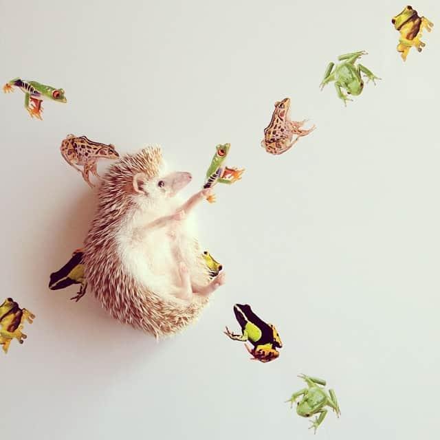 darcytheflyinghedgehog11